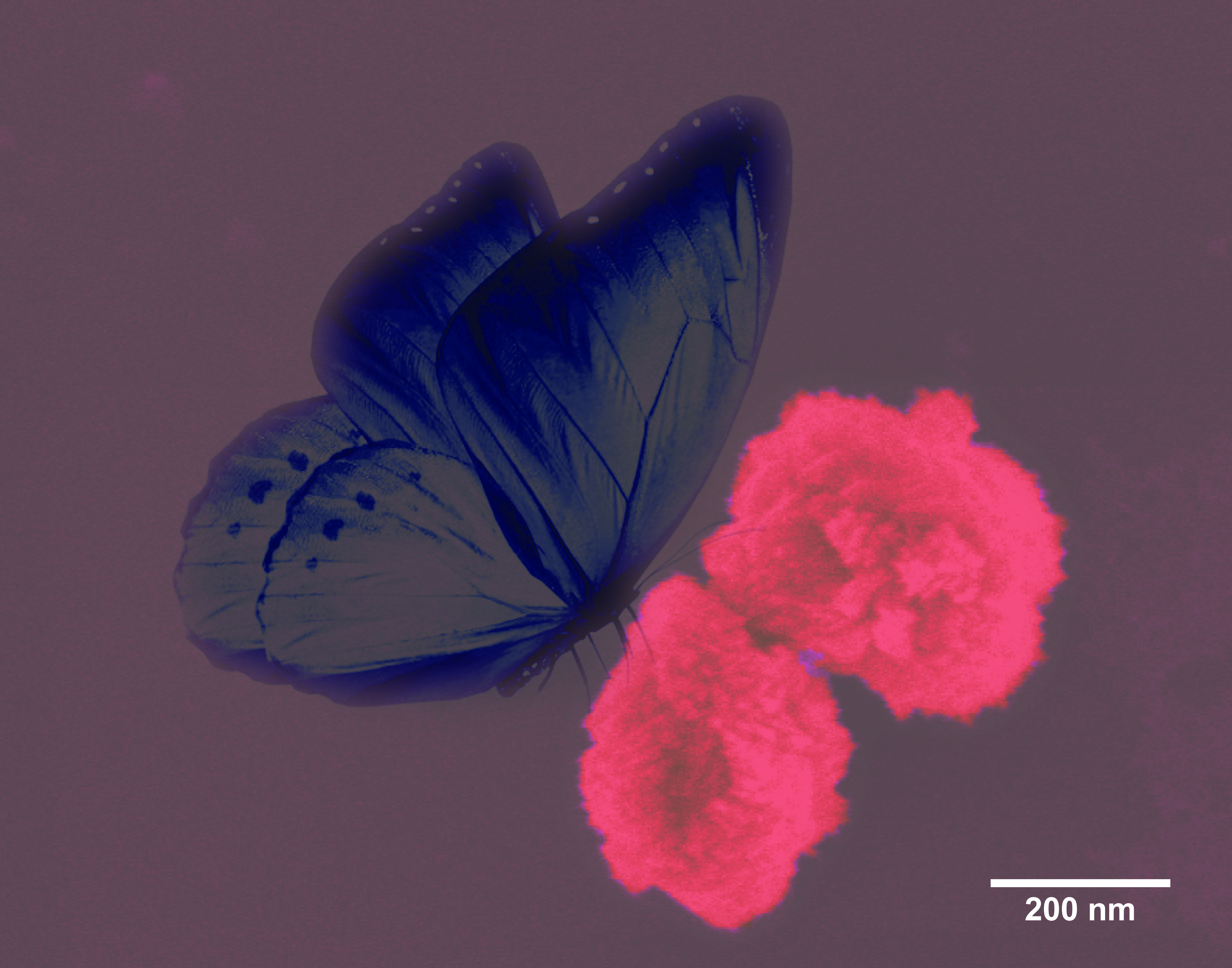 A Butterfly on Rose Flowers: Bioinspired CuO Nanoflowers
